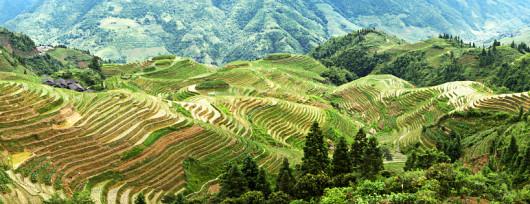 Tarasy Ryżowe Long Sheng (fot. Dishio - Wikipedia)