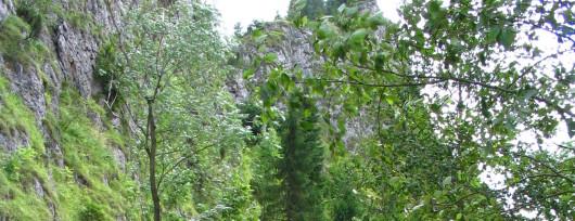 Wąwóz Homole obok Jaworek (fot.Vindicator Wikipedia)
