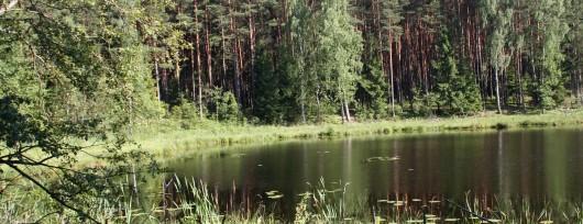 Jezioro Żabinek fragment Wdecki