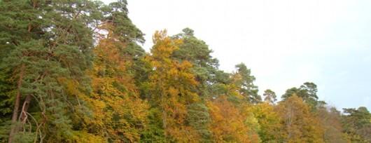 Pełne tajemnic i legend Jezioro Gardno w Wolińskim Parku Narodowym