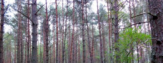 Lasy Zabierzowskie