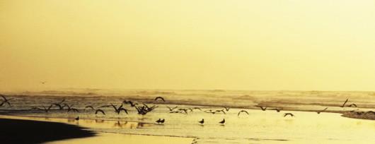 Park Narodowy Massa to prawdziwy raj dla ornitologów. Źródło: www.moroccotravel101.com