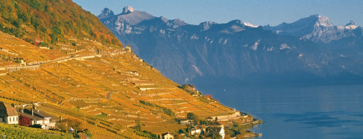 Opromienione zachodzącym słońcem winne tarasy w Lavaux. Źródło: www.lavaux.com
