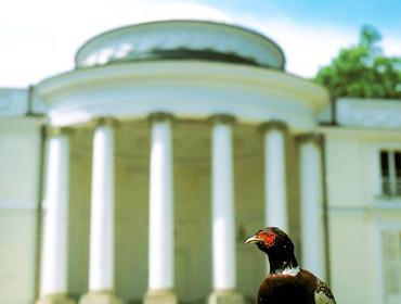 W natolińskiej Bażantarni nie może zabraknąć oczywiście tych pięknych ptaków. Źródło: www.natolin.edu.pl
