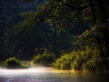 Spływ kajakowy Wieprzem jest niezapomnianym doznaniem estetycznym. Źródło: www.splywykajakowe.roztocze.net.pl