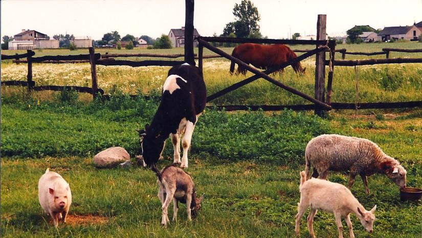 Zwierzęta w Konstantowie