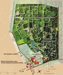 Plan ogrodu dendrologicznego w Rogowie