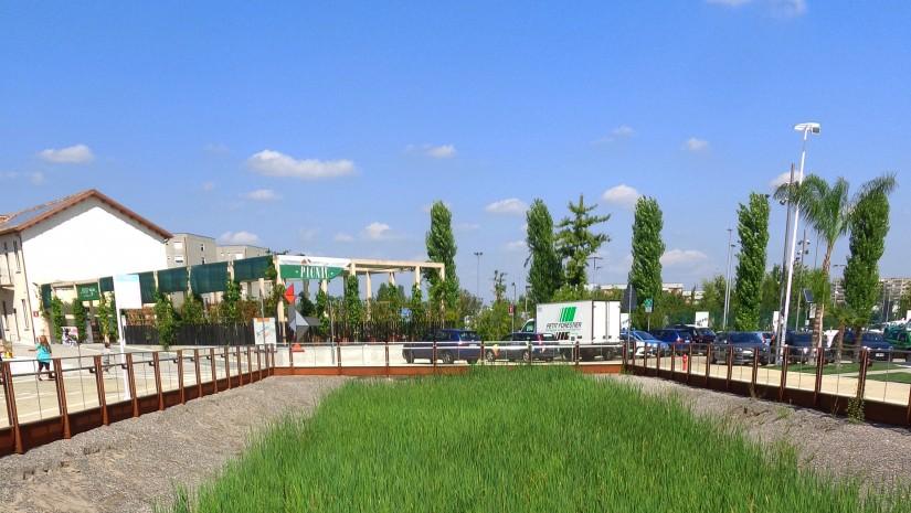 Na Expo w Mediolanie zadbano również o zieleń, projektując pomiędzy pawilonami niewielkie skwery, sadząc drzewa czy, jak widać na tym zdjęciu, zakładając pole ryżowe.