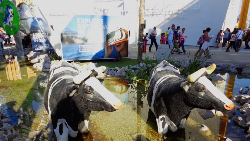 Łaciate krowy przy wejściu do pawilonu Holandii. Dlaczego stoją w wodzie? Czyżby dosłowna aluzja do holenderskich depresji?
