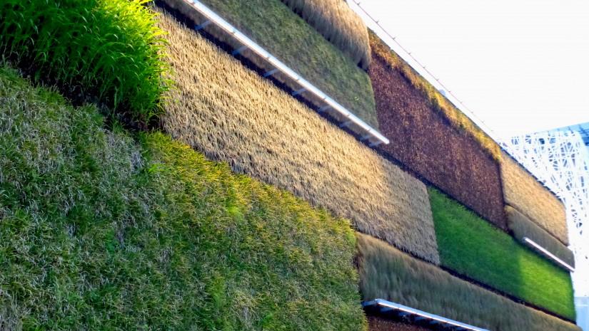 """Ekspozycja Izraela odbywa się pod hasłem """"Fields of Tomorrow"""", czyli """"Pola jutra"""". Aby je zobrazować, ściany (70 m długości i 12 m wysokości) całego pawilonu pokryto wertykalnymi ogrodami. Posadzone rośliny, naturalnie rosnące w Izraelu, zmieniają kolor w zależności od pór roku, co zaprzecza stereotypom jakoby to młode państwo było tylko suchą, jałową ziemią. Jako kraj Izrael istnieje niecałe 70 lat, jednak rolnicze tradycje narodu sięgają 3 tys. lat – jest czym się podzielić!"""