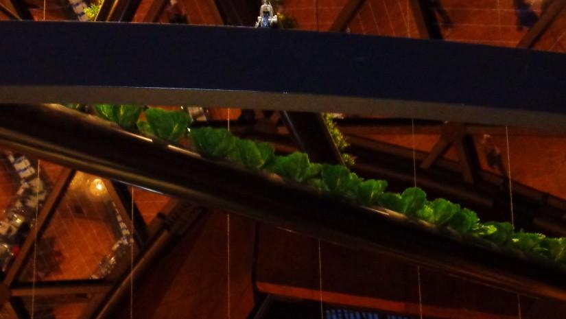 Co jest według Belgów najlepszą zakąską do piwa? Oczywiście zielona sałata! Najlepiej świeżutka, zerwana prosto z grządki nad barem.