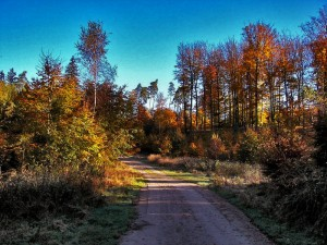 Szlak do Bursztynowej Góry