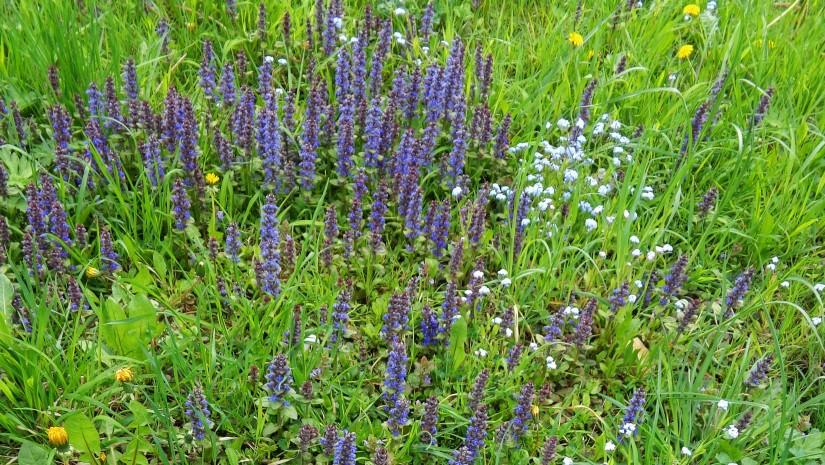 Górska łąka w maju – na szlaku na Górę Tuł. Można tu wypatrzeć nasze rodzime storczyki.