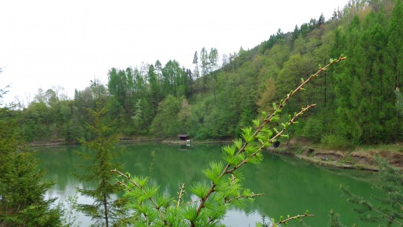 Jasnozielone modrzewie porastające zbocze wzniesienia Jesionowa nad Jeziorem Ton.