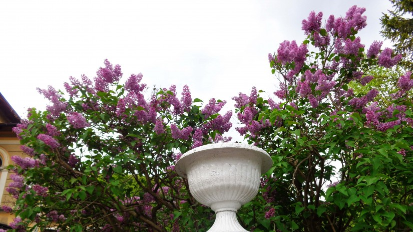 Krynica Górska jest piękna zwłaszcza w maju.
