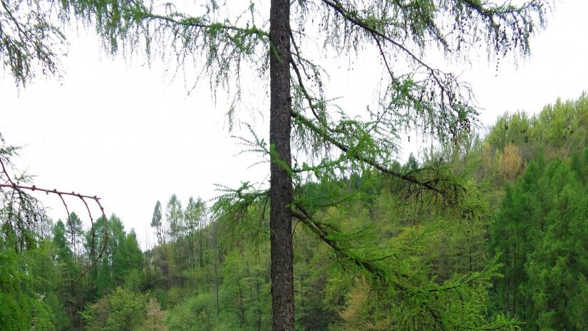 Wody Tonu idealnie komponują się z kolorem porastającej go roślinności.