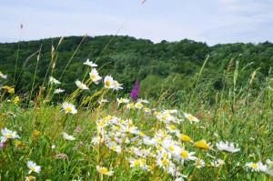 Kwitnąca łąka w okolicy Iwonicza-Zdroju