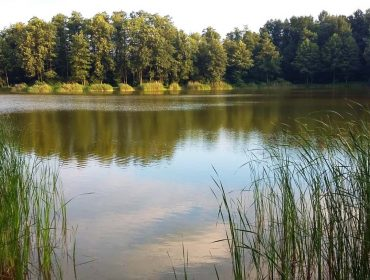 Staw Szczodre w dolnośląskiej wsi o tej samej nazwie jest pięknym, czystym, śródleśnym jeziorkiem.